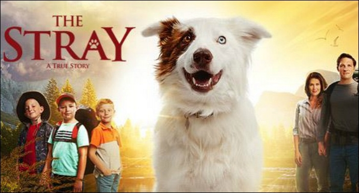 'The Stray' Movie to Open Nationwide This Friday, October 6th